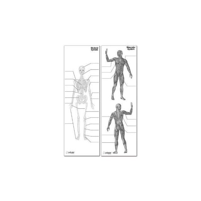 a2e® Body System Posters